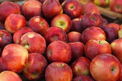 Empire Apples Royalty Free Stock Images