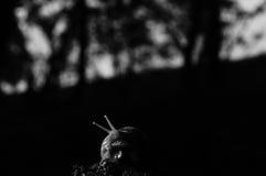 Empire d'escargot photo stock