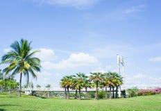 Emplacement dans le parc, le pont et les paumes extérieurs en parc image libre de droits