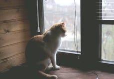 Emplacement de chat sur le filon-couche de fenêtre, regardant la fenêtre et attendant quelqu'un Photo libre de droits