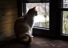 Emplacement de chat sur le filon-couche de fenêtre, regardant la fenêtre et attendant un humain Images libres de droits