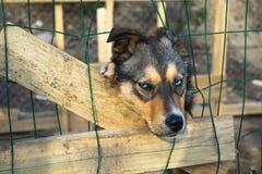 Emplacement isolé triste de chien dans la cage Images stock