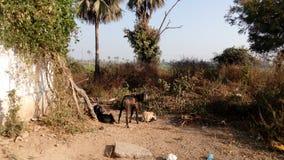 Emplacement naturel de village avec des arbres Image libre de droits
