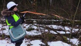 Empleado de la silvicultura de la mujer que examina el bosque destruido almacen de metraje de vídeo