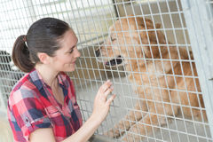 Empleado de sexo femenino de la perrera que comprueba el estado de los perros Fotografía de archivo