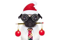 Employé de bureau de chien des vacances de Noël Images stock