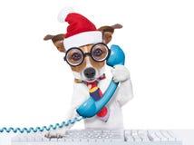 Employé de bureau de chien des vacances de Noël Photographie stock libre de droits
