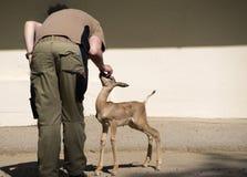 Employé de zoo Photographie stock libre de droits