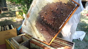The Employee Selects the Apiary Bee Frames stock footage