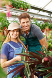 Employees of a nursery shop in a greenhouse. Two employees of a nursery shop working in a greenhouse with plants stock image