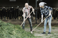 Employees working in livestock barn Royalty Free Stock Photography
