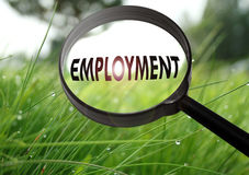 Employment. Magnifying glass with the word employment on grass background. Selective focus stock photos