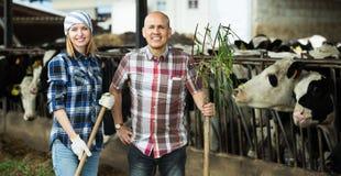 Employés travaillant dans la grange de bétail Photo stock