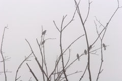 Empoleirado na névoa Foto de Stock