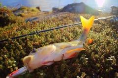 Empoleire-se nos raios do sol de ajuste pesca Imagem de Stock