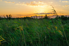 Emporda marshes. Emporda fluvia river in emporda wetland Stock Image