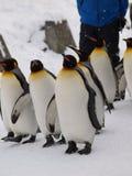 Emporer Pinguin Lizenzfreies Stockfoto