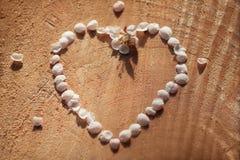 Empregada doméstica do contorno do coração do vintage das pétalas da cereja em fundo de madeira rachado com profundidade rasa Foto de Stock
