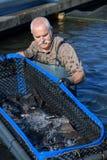 Empregado superior da piscicultura que trabalha na água imagens de stock