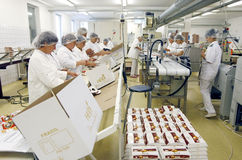 Empregados da fábrica do chocolate