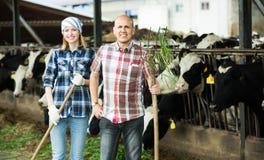 Empregados que trabalham no celeiro dos rebanhos animais Fotografia de Stock Royalty Free