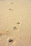 Empreinte de pas de chat sur un sable de corail Images libres de droits