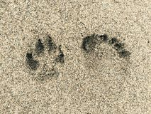 Empreinte de pas de chien et d'humain Photographie stock