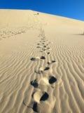 Empreinte de pas de dune de sable d'Eureka Photos libres de droits