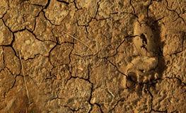 Empreinte de pas sur la terre aride Images stock