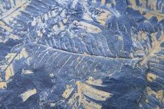 Empreinte fossile de fougère d'arbre Photographie stock libre de droits
