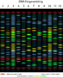 Empreinte génétique