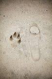 Empreinte humaine et animale de Signle sur le sable Photo libre de droits