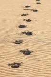 Empreintes de pas évidentes en sable sur le désert. Photo stock