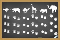 Empreintes de pas d'animaux sur le tableau noir Image libre de droits