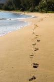 Empreintes de pas dans Kauai Photos libres de droits