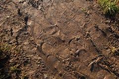 Empreintes de pas dans la boue Images libres de droits