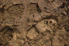 Empreintes de pas dans la boue Image libre de droits