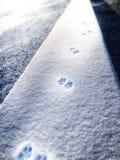 Empreintes de pas dans la neige photo stock