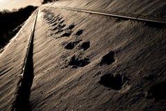 Empreintes de pas dans la neige Photos libres de droits