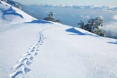 Empreintes de pas dans la neige Photographie stock libre de droits