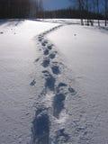 Empreintes de pas dans la neige photographie stock