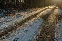 Empreintes de pas dans la neige sur un chemin forestier Photos stock