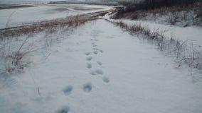 Empreintes de pas dans la neige Traces de la bête dans la neige clips vidéos