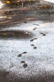 Empreintes de pas dans le chemin humide couvert par la première neige Image libre de droits