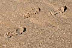 Empreintes de pas dans le désert 1 Photos libres de droits