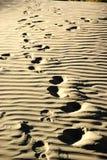 Empreintes de pas dans le désert Images libres de droits