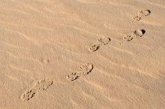 Empreintes de pas dans le désert 2 photographie stock