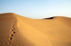 Empreintes de pas dans le désert Photo libre de droits