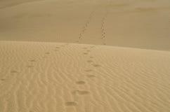 Empreintes de pas dans le désert Photographie stock