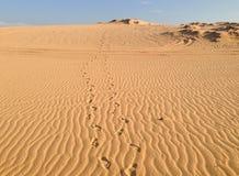 Empreintes de pas dans les dunes de sable blanches photos stock
